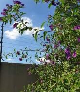 electric fencing Honeydew